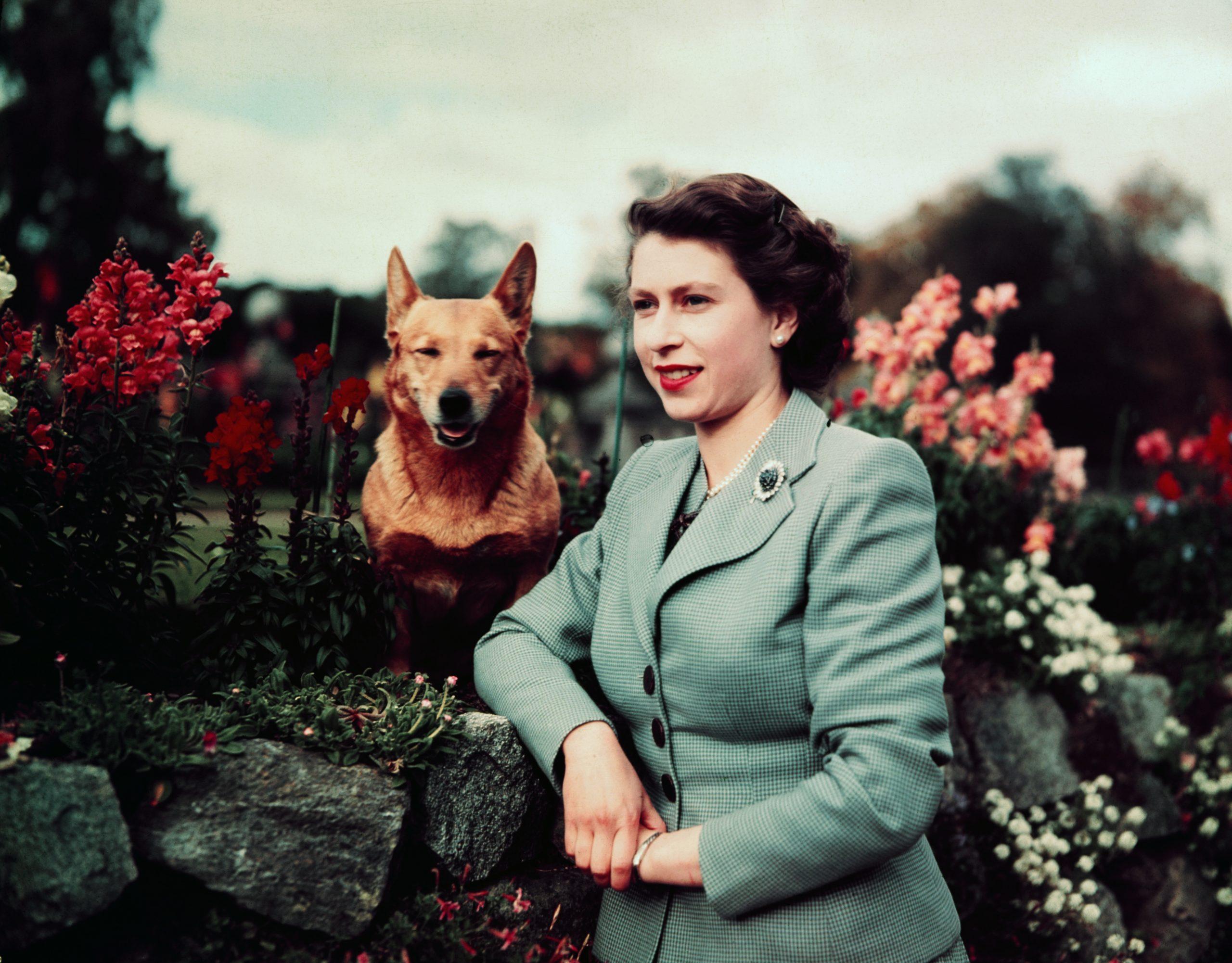 Une jeune reine avec l'un de ses chiens à Balmoral.