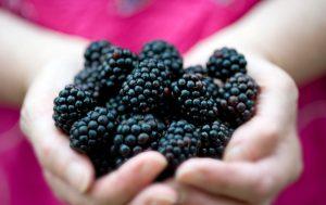 Femme-tenant-des-mûres-fraîches-des-fruits-basse-calorie
