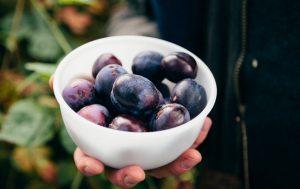 Personne-tenant-un-bol-de-prunes-fruits-basse-calorie