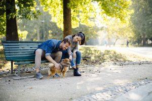 Couple assis sur un banc de parc avec un chien après avoir envoyé un texto.