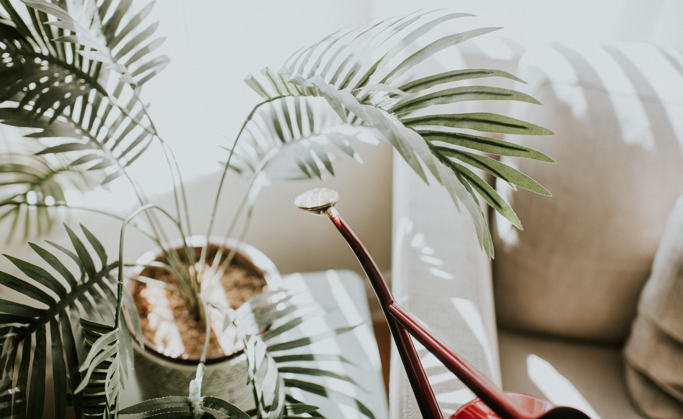 Plante d'intérieur assise à côté d'un arrosoir rouge brillant.
