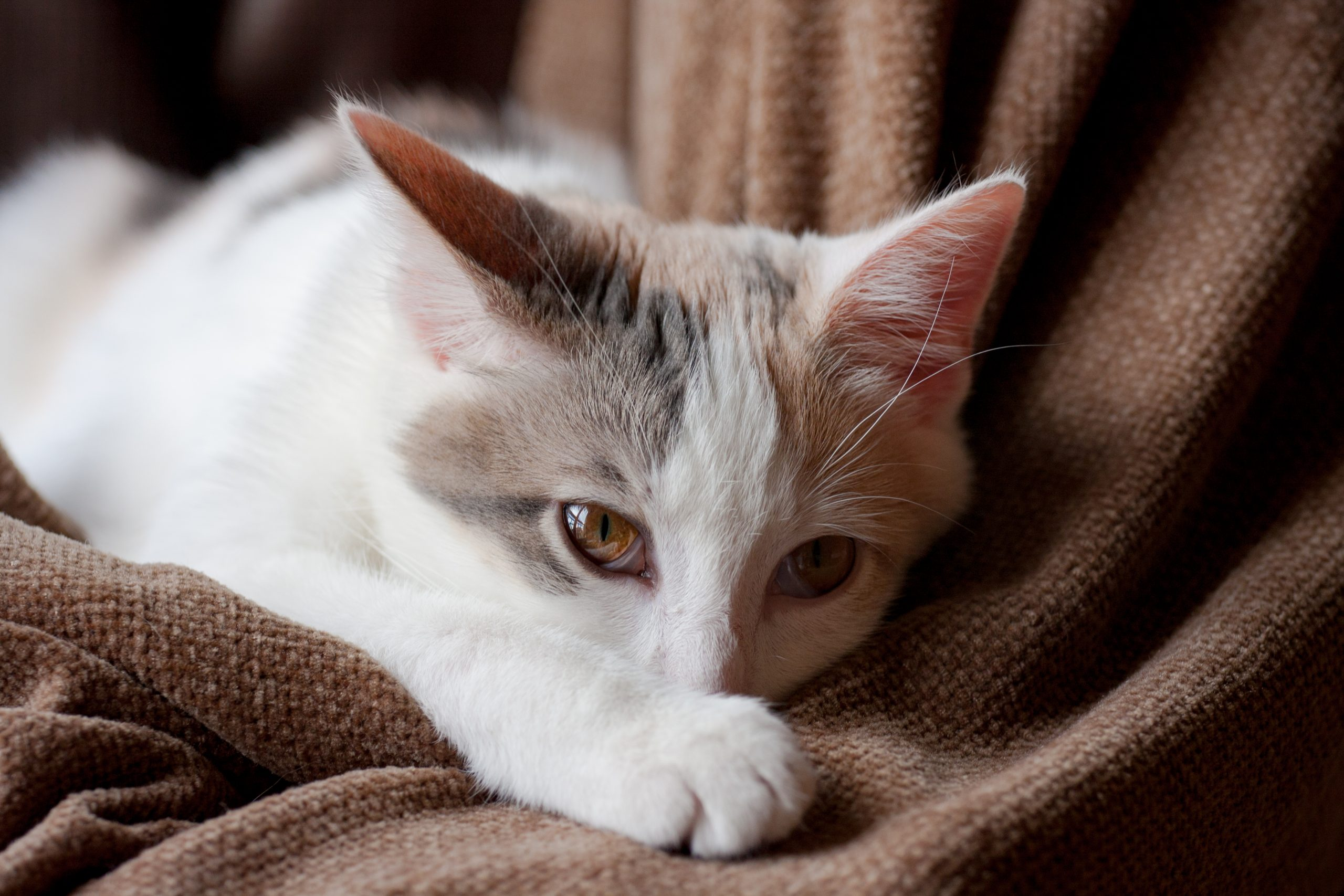 rappel d'aliments pour chats