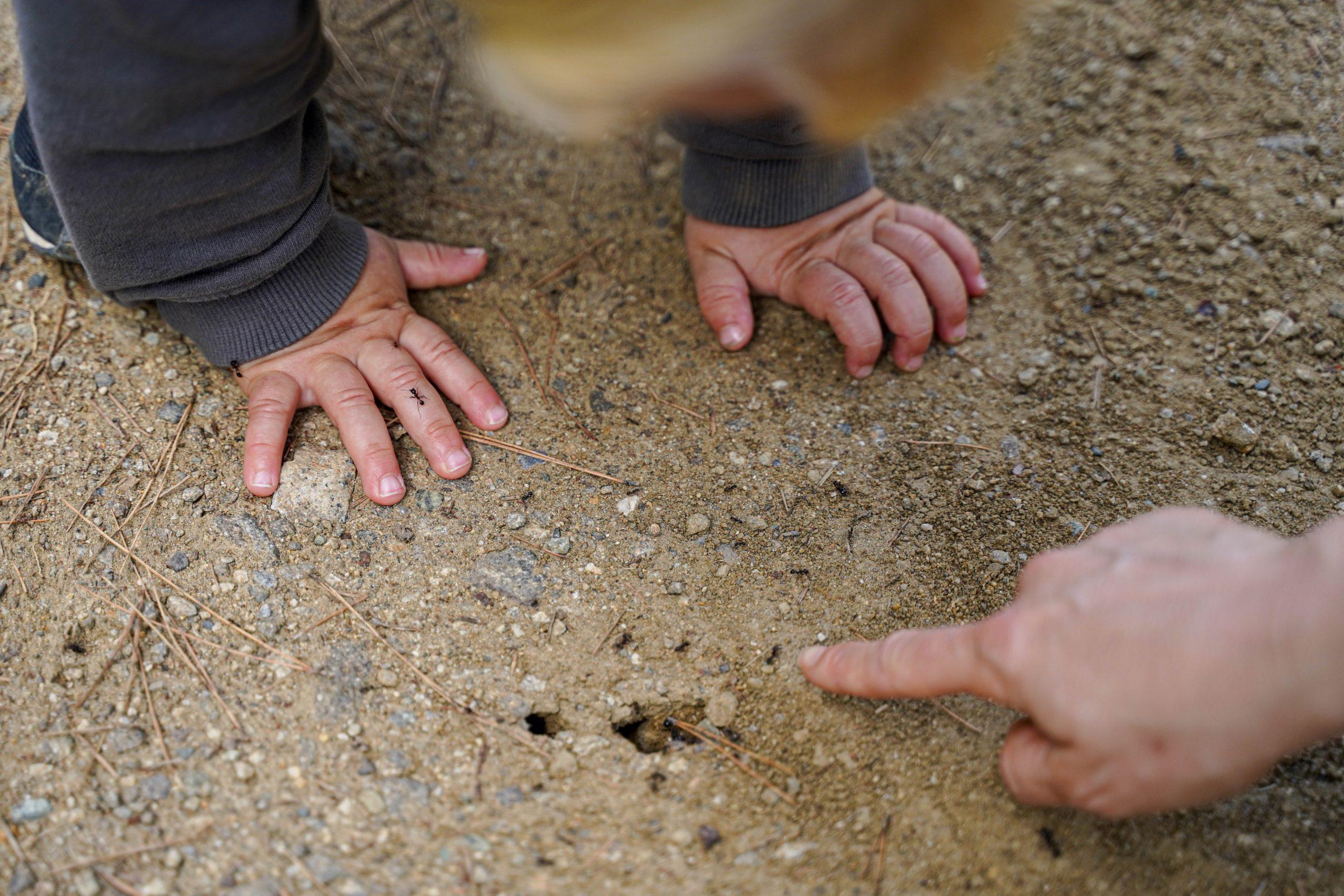 Une mère montre des fourmis à son jeune fils.