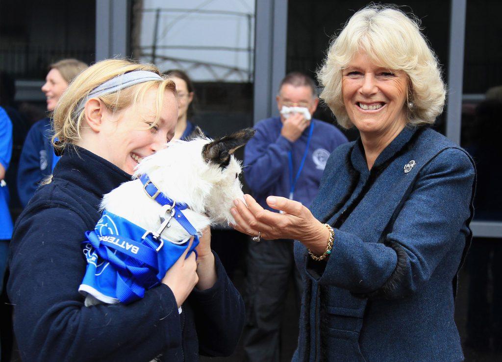 Camilla, duchesse de Cornouailles, caresse un chien lors de sa visite à la maison pour chiens et chats de Battersea, le 27 octobre 2010.